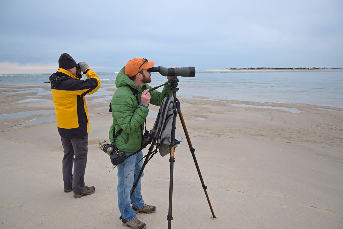 winter-beach-birding